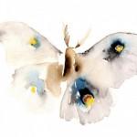 Imágenes de mariposas pintadas con acuarela