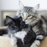 Imágenes de gatitos bebe tiernos: Gatitos dulces con frases de amor- Imágenes