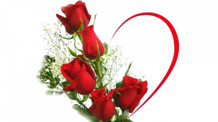 rosas-san-valentin-2