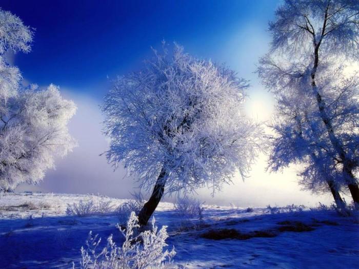 foto-arboles-en-invierno