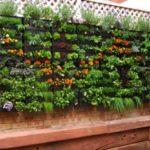 Imágenes y decoracion de jardines pequeños y verticales