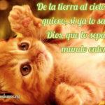 Bonitos mensajes en imágenes hermosas de gatitos para decir te quiero y te amo