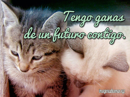 HermososGatitos22
