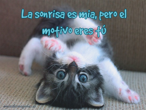HermososGatitos24
