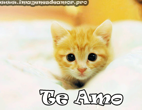 HermososGatitos33