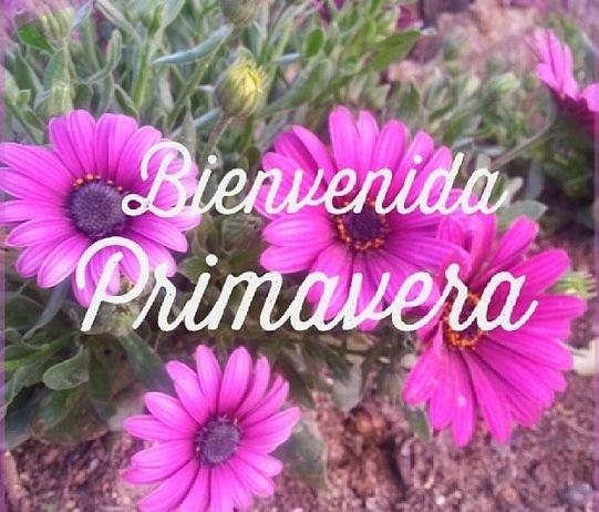 bienvenidaprimavera24