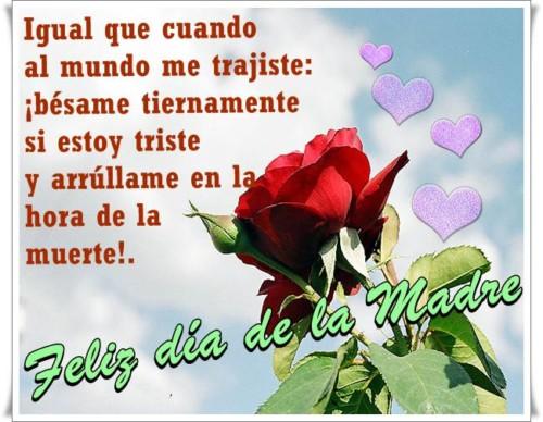 rosa-cielo3