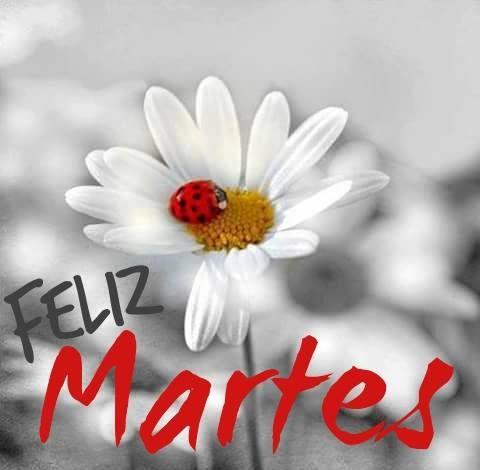 felizmartes21