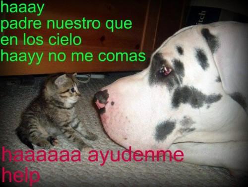 fotos-de-gatos-graciosos-con-frases-2