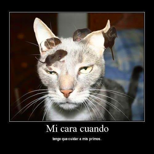 imagenes-graciosas-de-gatos-primos