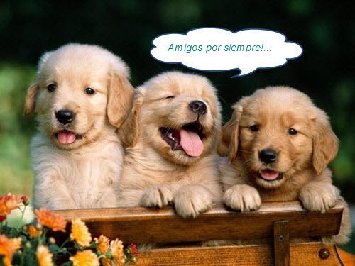 imagenes-de-perros-con-frases-de-buenas-noches