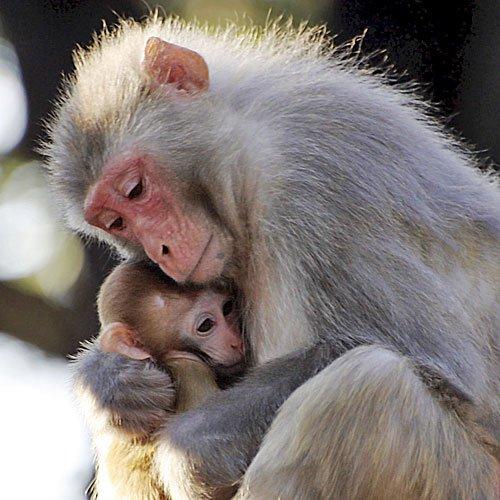 572-4-los-monos-cuidan-de-sus-crias