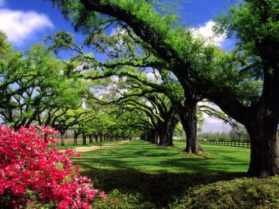 Primavera-en-Carolina-del-Sur