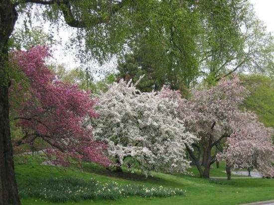 prIMAVERACentral-Park-en-primavera