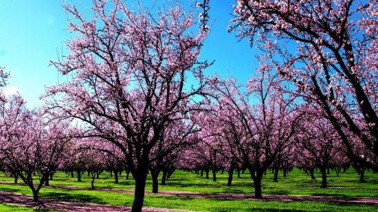 primavera.jpg1
