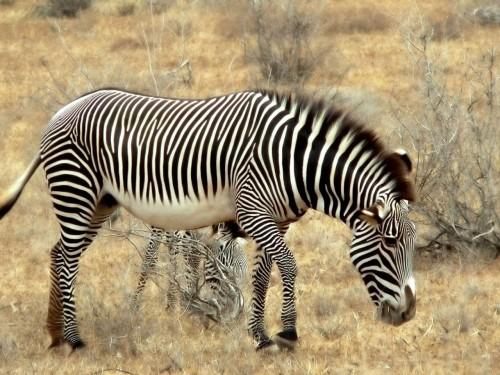animales-salvajes-34-2508