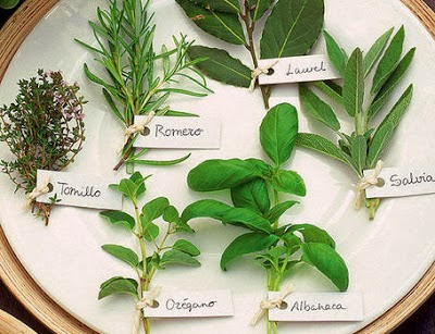 plantas medicinales 00