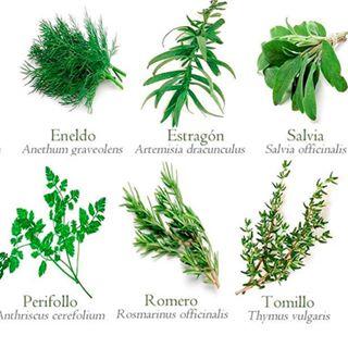 Im genes de plantas medicinales para descargar for Cultivo de plantas aromaticas y especias