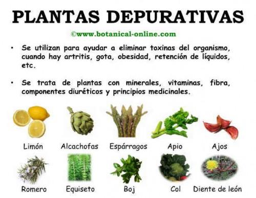 Im genes de plantas medicinales para descargar for Para q sirven las plantas ornamentales