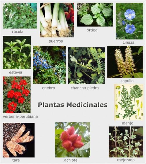 Im genes de plantas medicinales para descargar for 5 plantas ornamentales con sus nombres