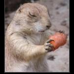 Frases graciosas con animales: Imágenes