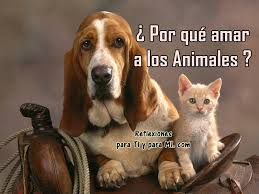 animales.png3