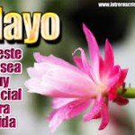 Imágenes y frases positivas para recibir el mes de Mayo