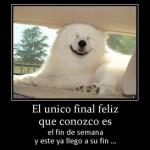 Imágenes de animales con frases graciosas para compartir