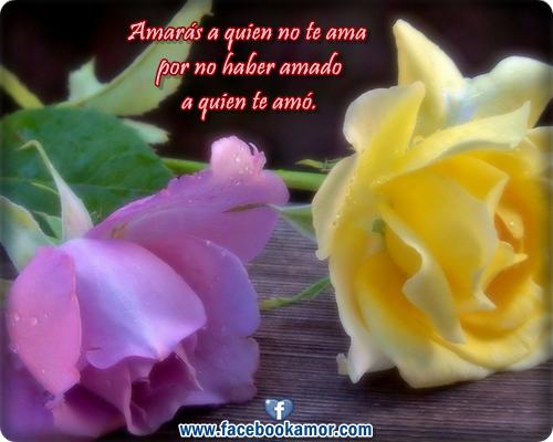 Reflexiones con fondos de flores para compartir frases de reflexiones de amor para facebook thecheapjerseys Image collections