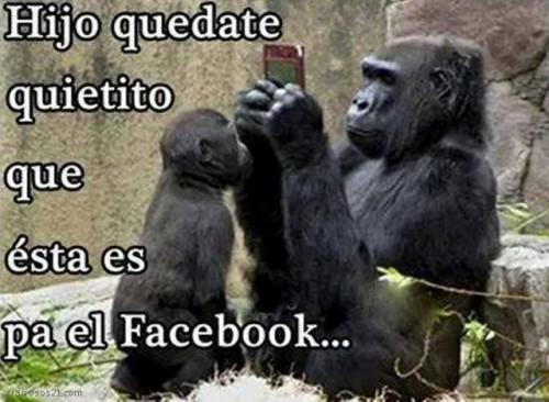 micos
