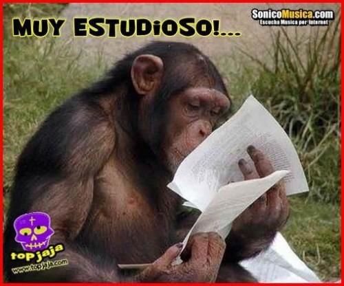 micos.jpg2