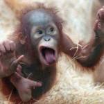 Imágenes chistosas con micos para compartir en Facebook