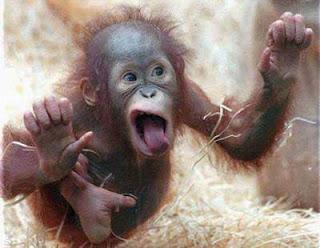 micos.jpg4