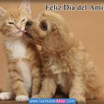 Imágenes con frases y animales para compartir con amigos