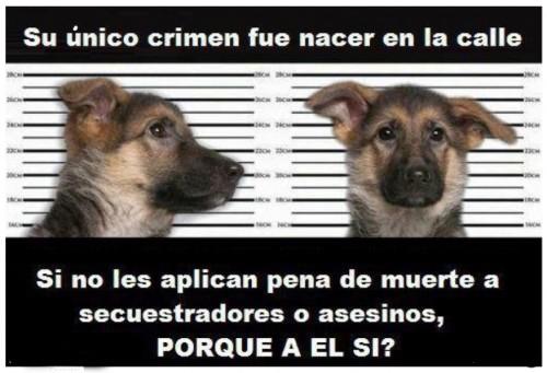 perro-callejero.jpg14