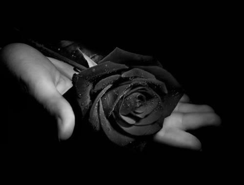 lutoespecies-de-flores-negras-beleza-exotica-e-rara-12