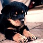 Imágenes de perros tiernos para compartir en el Día del animal el 29 de abril