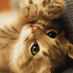 Imágenes de gatos bebe dulces para compartir hoy: Fotos divertidas de gatos