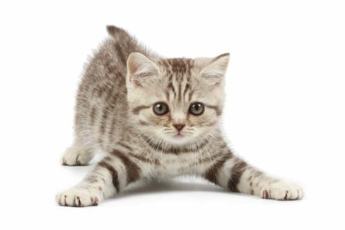 gato26-COL-CURIO-MISCELANEA