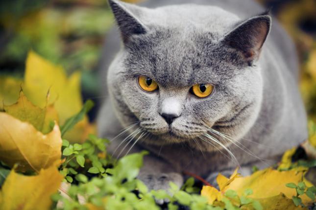 gatos8-sorprendentes-cosas-que-no-sabias-sobre-los-gatos