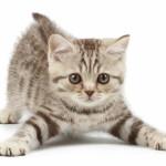 Imágenes de gatitos bebes muy tiernos y bonitos con frases