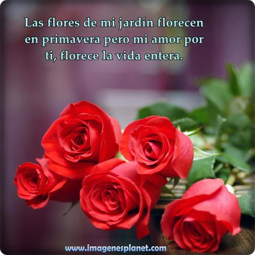 RosasConFrasesAmor14