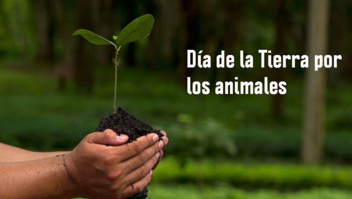 AP-Día-De-La-Tierra-Galeria-Animales-En-Peligro-De-Extinción-0000-Rinoceronte-de-Java-1440x900