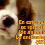 Imágenes tiernas de perros con bonitos mensajes para festejar el día del animal