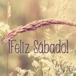 Bonitas palabras para dar la bienvenida al dia sabado en imágenes