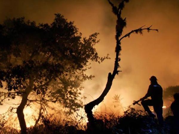 CombatesIncendiosForestales15