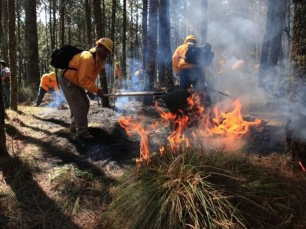 Día Internacional del Combatiente de Incendios Forestales 16
