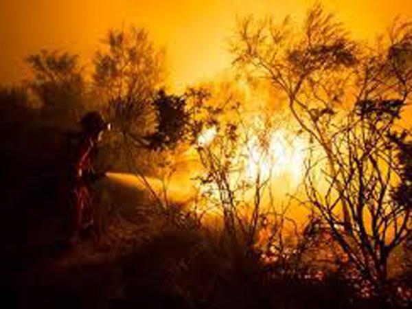 Día Internacional del Combatiente de Incendios Forestales 17