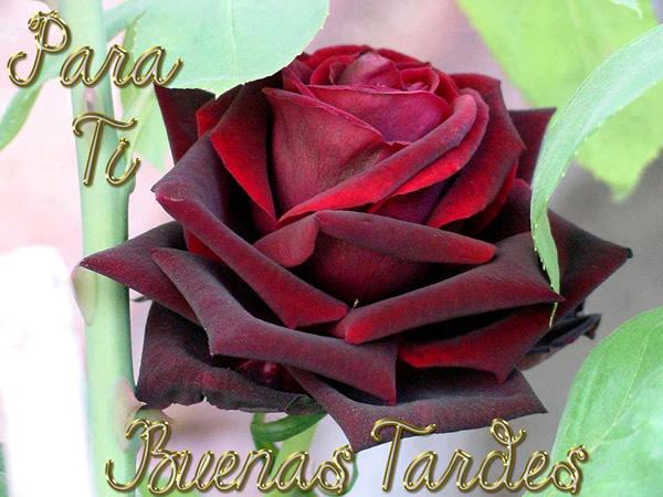 Imagenes Buenas Tardes 11