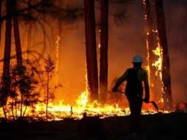 IncendiosForestales21